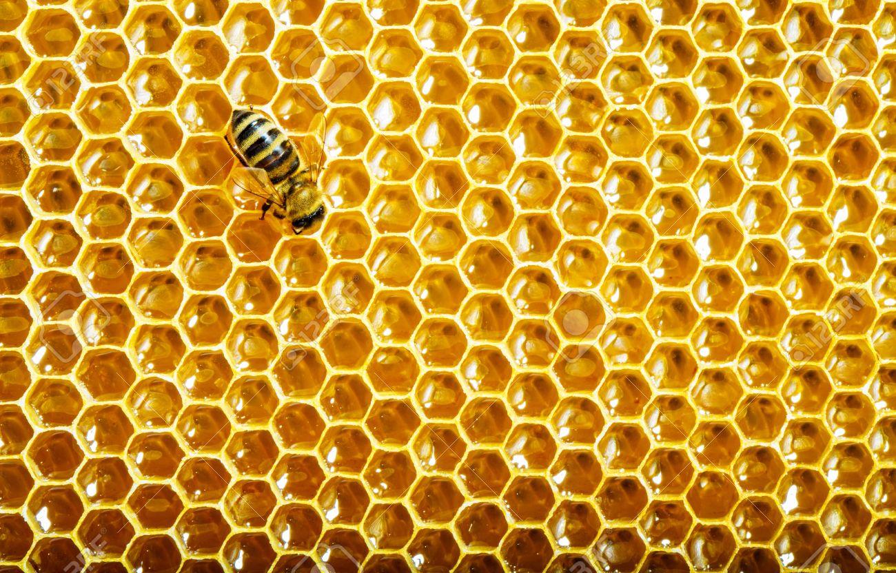 Nido d ape comecreareunsito - Nido api finestra ...
